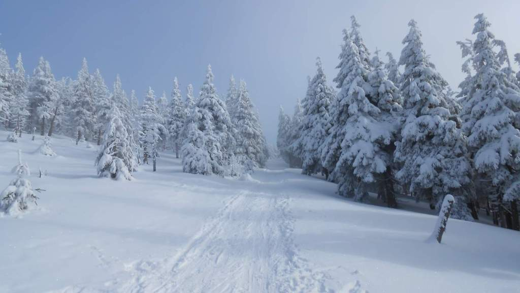 Mountain forest in winter
